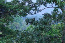 Man kan høre fuglene synge, når man står på terassen (der kaldes the yogaplatform)