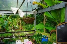 Lises greenhouse