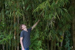 Riesen Bambusbäume!