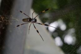 Och manno, hier gibt es doch große Spinnen...