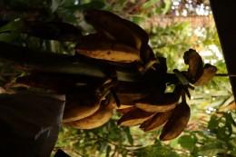 Bananen für den Bananenkuchen.