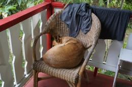 So finden wir Brando morgens. Unser Wachhund ist zu faul um aufzustehen.