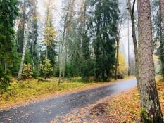 Finnischer Wald #2