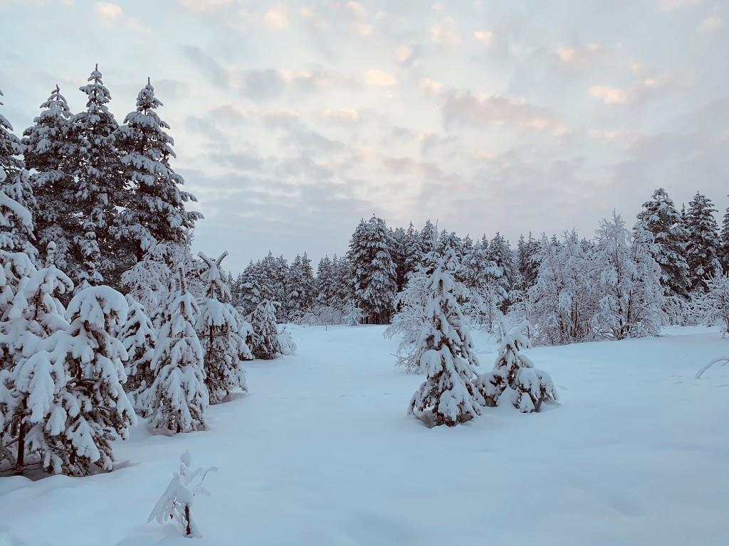Ach Lappland, wie schön du bist!