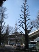 Die Straße vor dem Park ist gesäumt von diesen düster anmutenden Bäumen, die einen ersten Eindruck von der Stimmung im immer grünen Wald vermitteln