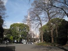 Der Park selbst befindet sich inmitten der grauen Betonwüste Tokyos, aber auch wenn man die Stadt nicht hören kann, so blitzen gelegendlich die Hochhäuser durch die Kronen.