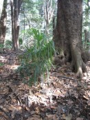 Der 0,7km2 große Wald, der den Schrein umgibt, beherbergt 120000 Bäume 365 unterschiedlicher Arten.