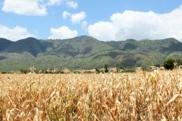so sahen alle Felder im August aus.. hoffen wir, dass der Mais dieses Mal schön grün wird und die Menschen ihn ernten können :)