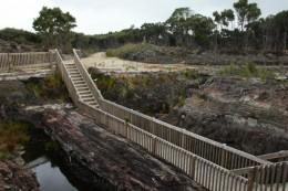 100.000 Jahre altes Kauriholz