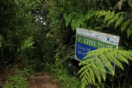 Kiwi Zone!