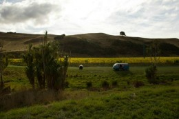 Auto im Gras vor Weintrauben und Bergen