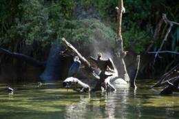 Windende Vögel vor rauchenden Baumstämmen