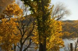 Herbstlich geht es zu