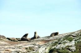 Schöne Robben