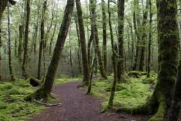 Moosiger Wald