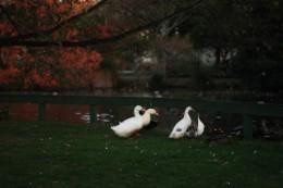 Auch Gänse gab es im Park
