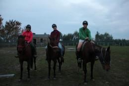 Pferdebande