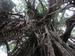 Kathedralenfeigenbaum