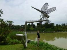 hier gibts auch riesige Libellen...