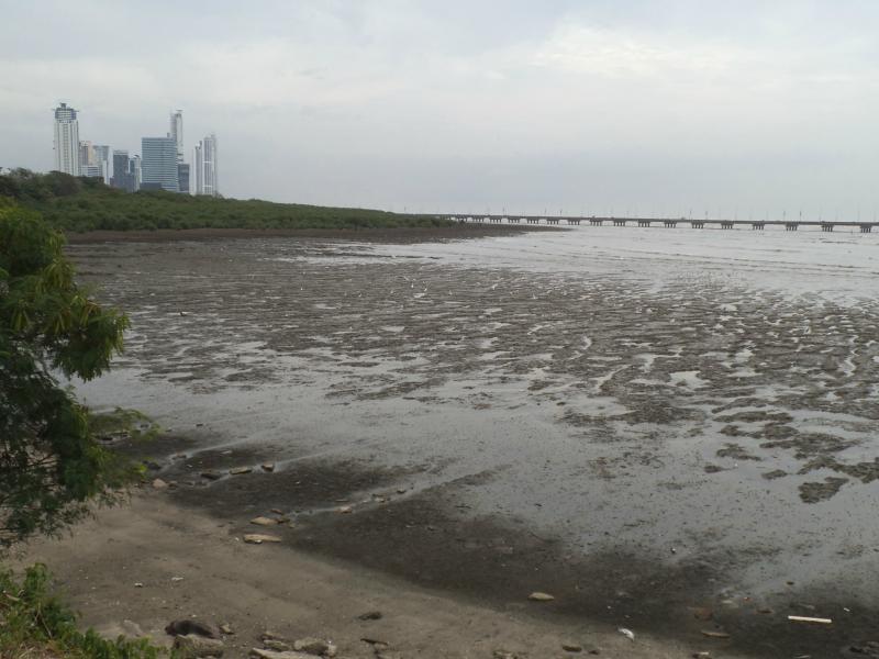 Magroven und Watt bei Panama la Vieja