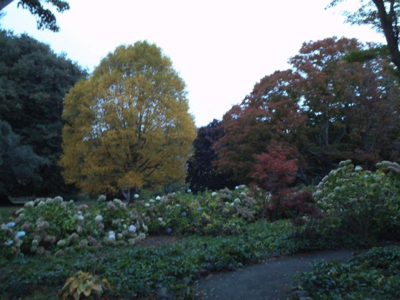 Wieder einmal Herbstfarben (Botanischer Garten)