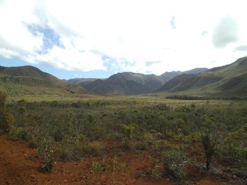 Rot-grüne Buschlandschaft
