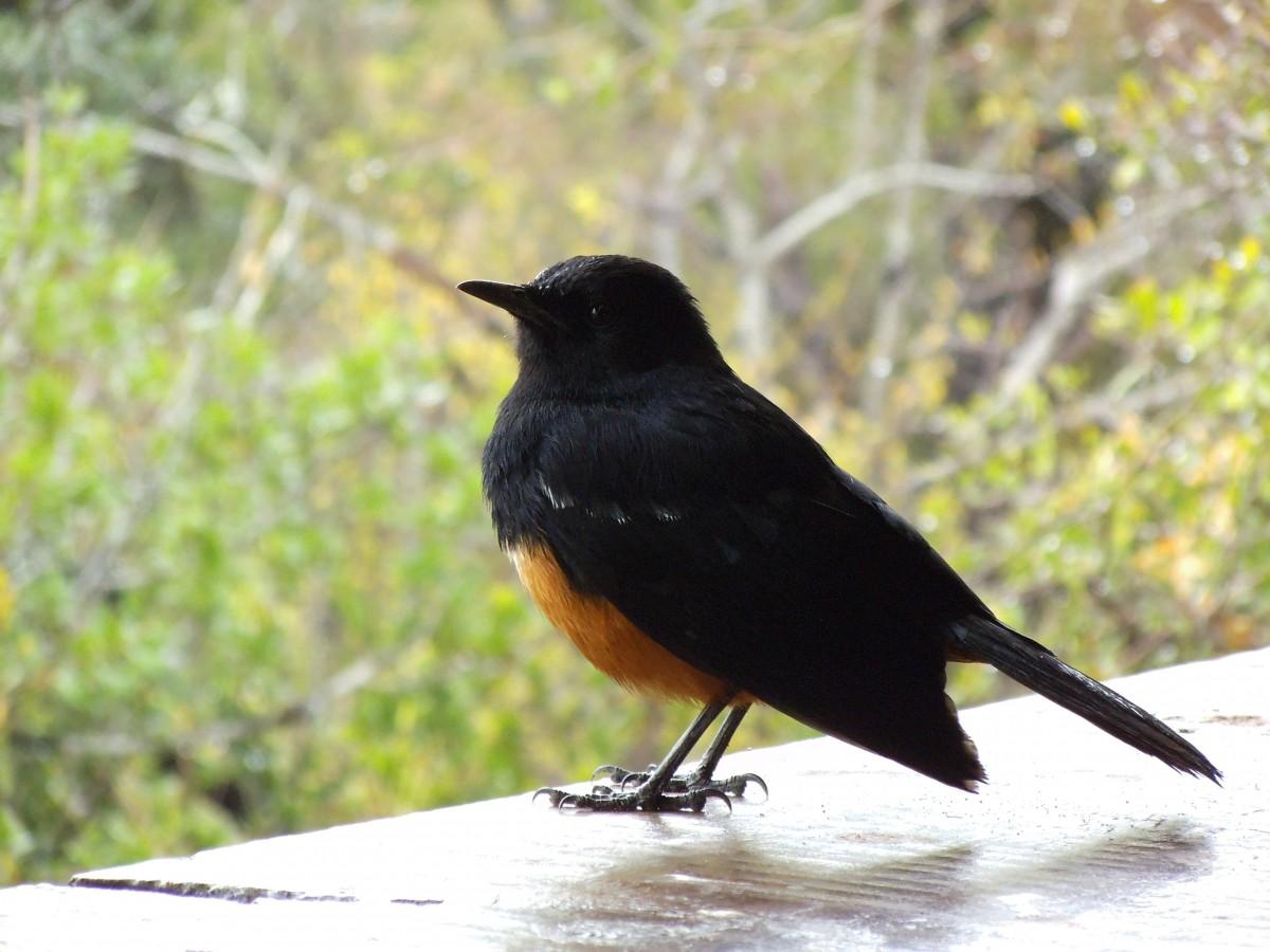Südafrika ist ein Mekka für Vogelbeobachter