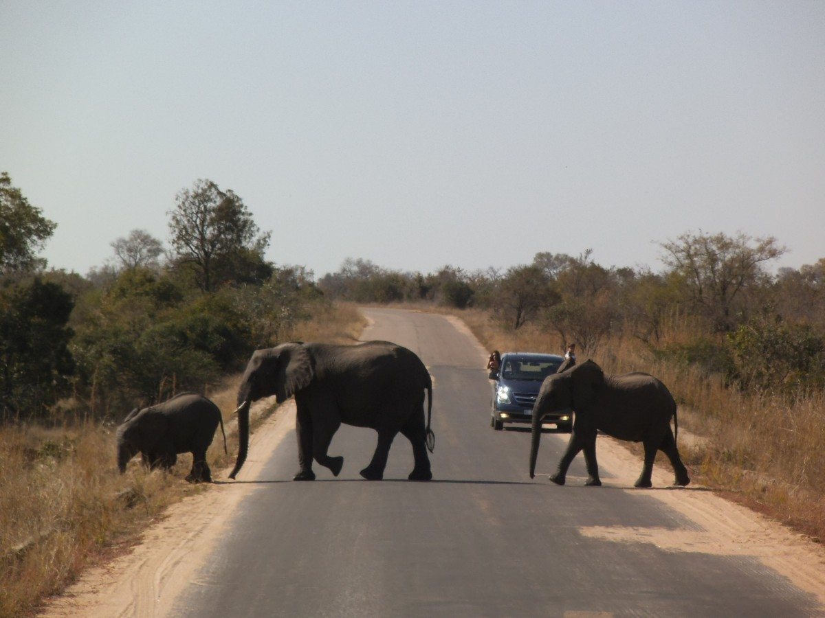 Elephant Crossing inklusive Touristen