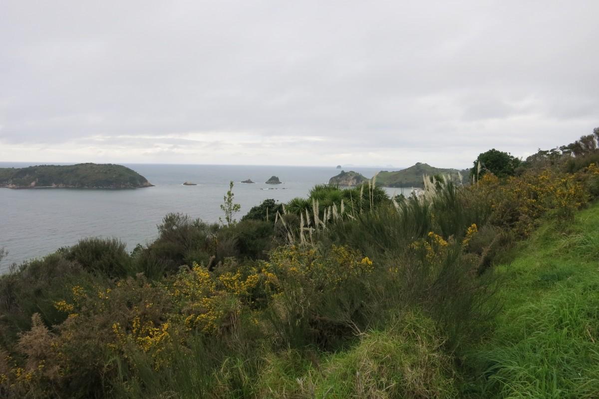 Ausblick vom Cathedral Cove Parkplatz auf der Coromandelhalbinsel