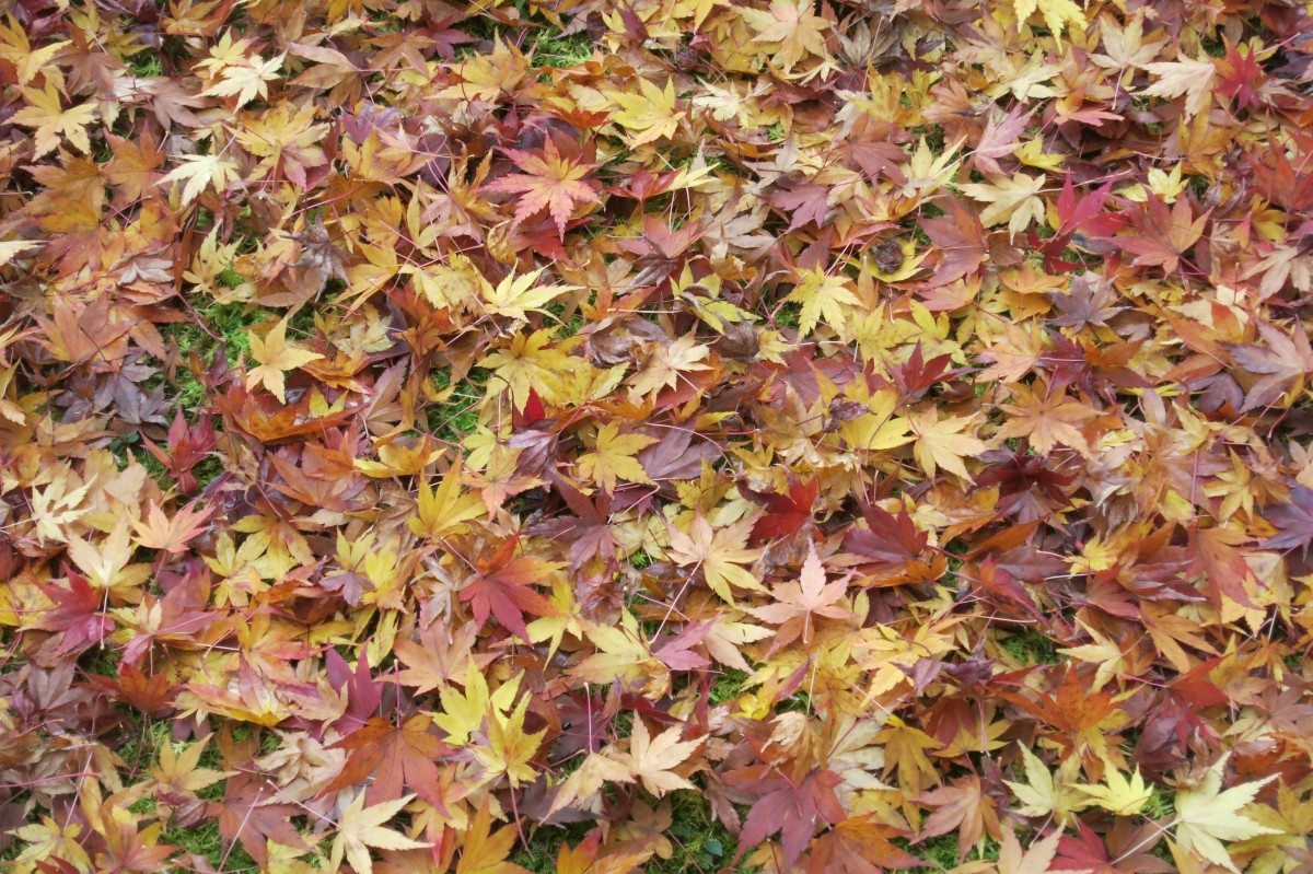 Spielen wir japanischer Tourist: man fotografiere Blätter :) (Nara)