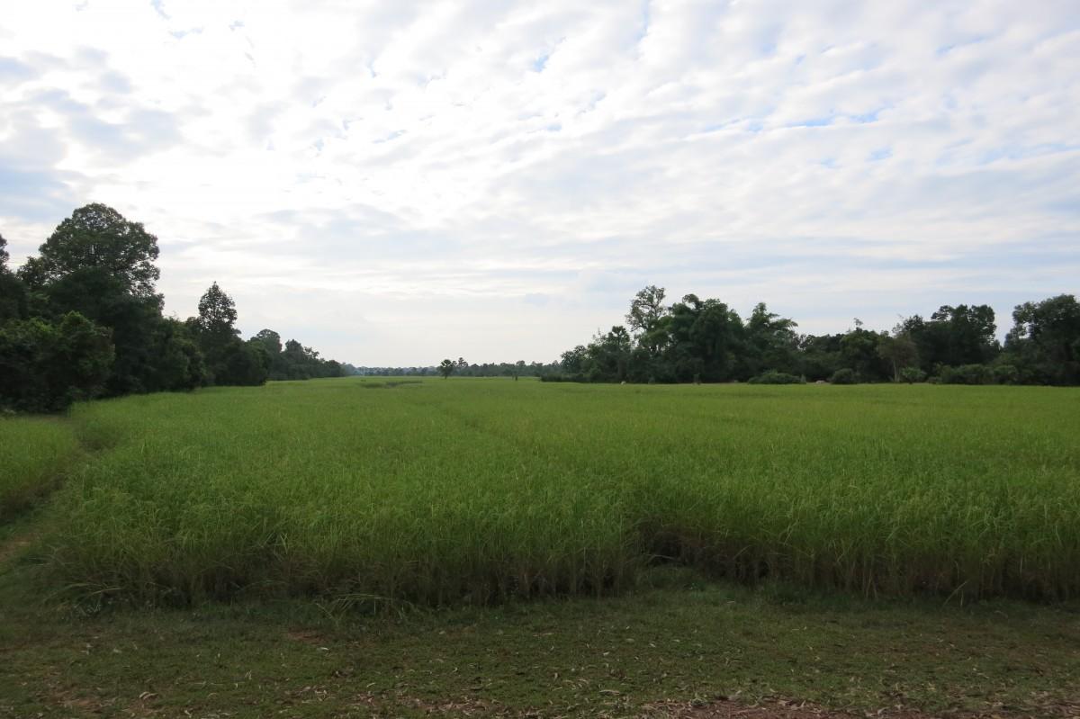Kambodscha ist ein unglaublich grünes Land (auf dem Weg nach Banteay Srei)