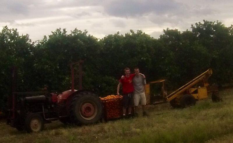 Auf der Orangenfarm