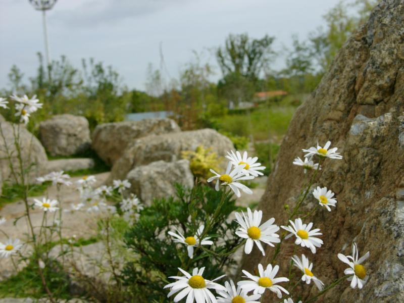 Impression vom Wegesrand im Steingarten