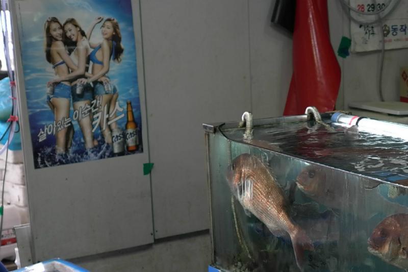 Wohin schauen diese Fische nur (typisch Mann :)