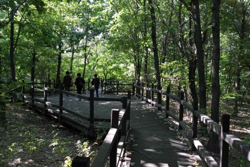 Wald im Yeouido Park