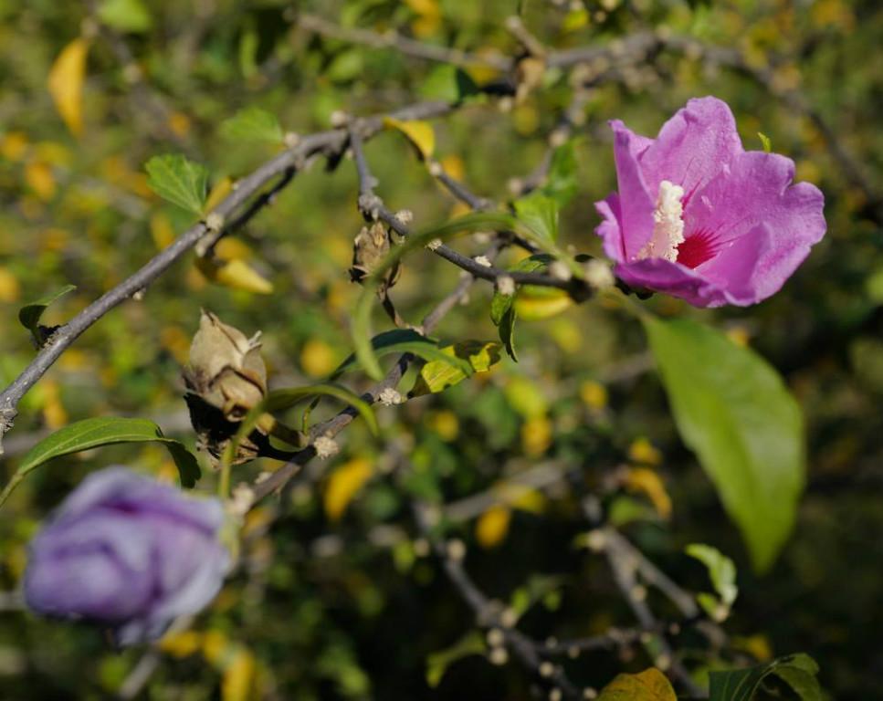 Viel Planten un Bloomen