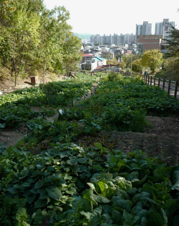 Salatanbau mitten in der City...