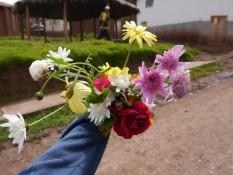 die Blumen von Mandy