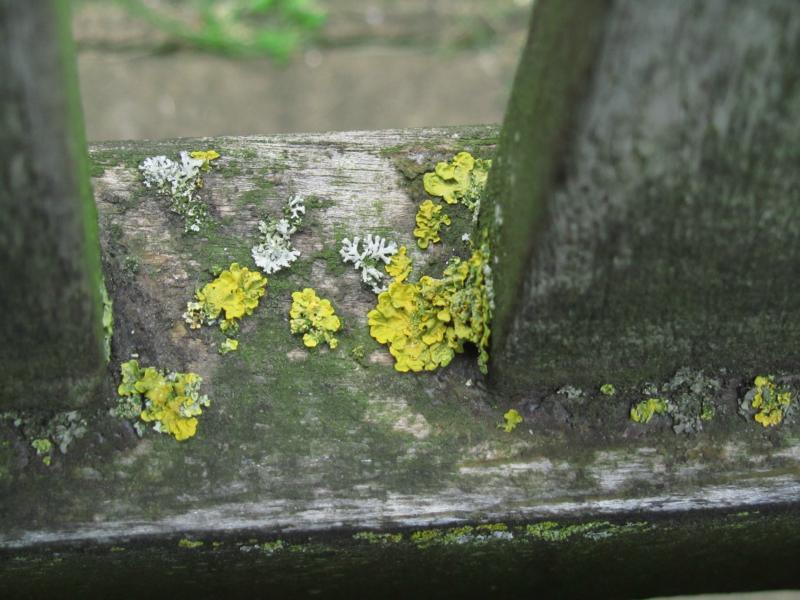 Flechten auf der Bank im St. James´s Park