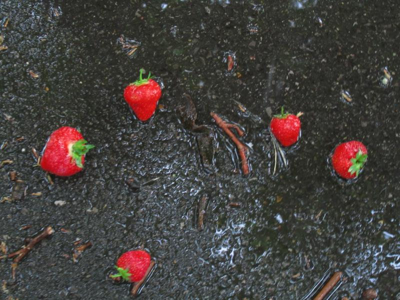 Strawberries on the ground.