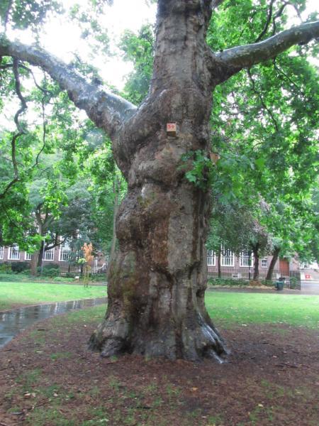 Riesen Baum bei Regen im Park.