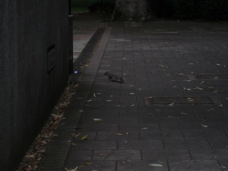 Flottes Eichhörnchen.