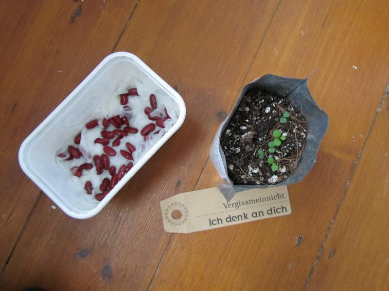Meine Gruenpflanzen.
