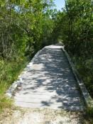 Brücke über den Sumpf