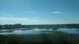 Everglades Grasland