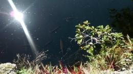 Fische dösen