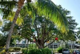 Baum mit Christbaumkugeln